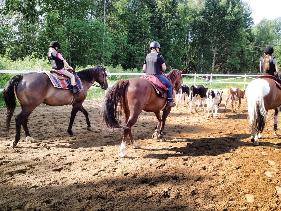 Hevosia Myynnissä